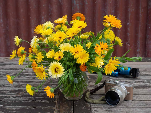 Flowers-for-photo-shoots-and-displays (1