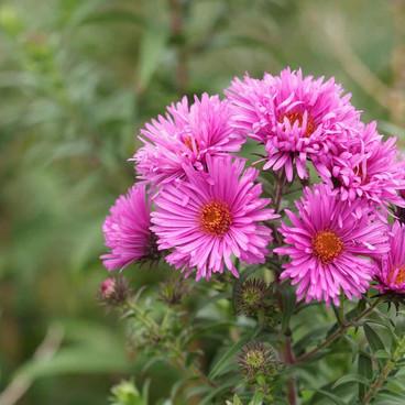 Garden-Gottage-Flowers-Fordinbridge.jpg