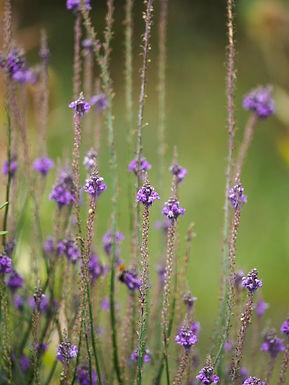 Garden-Cottage-Flowers.jpg