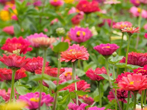 Flowers-fror-Hampshire-Florists.jpg