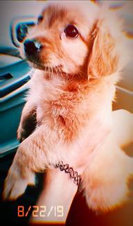 puppy.jpg.png