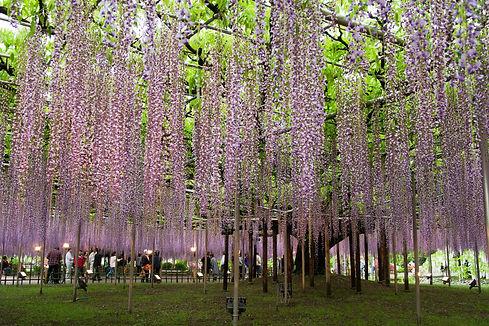 Ashikaga Flower Park.jpg