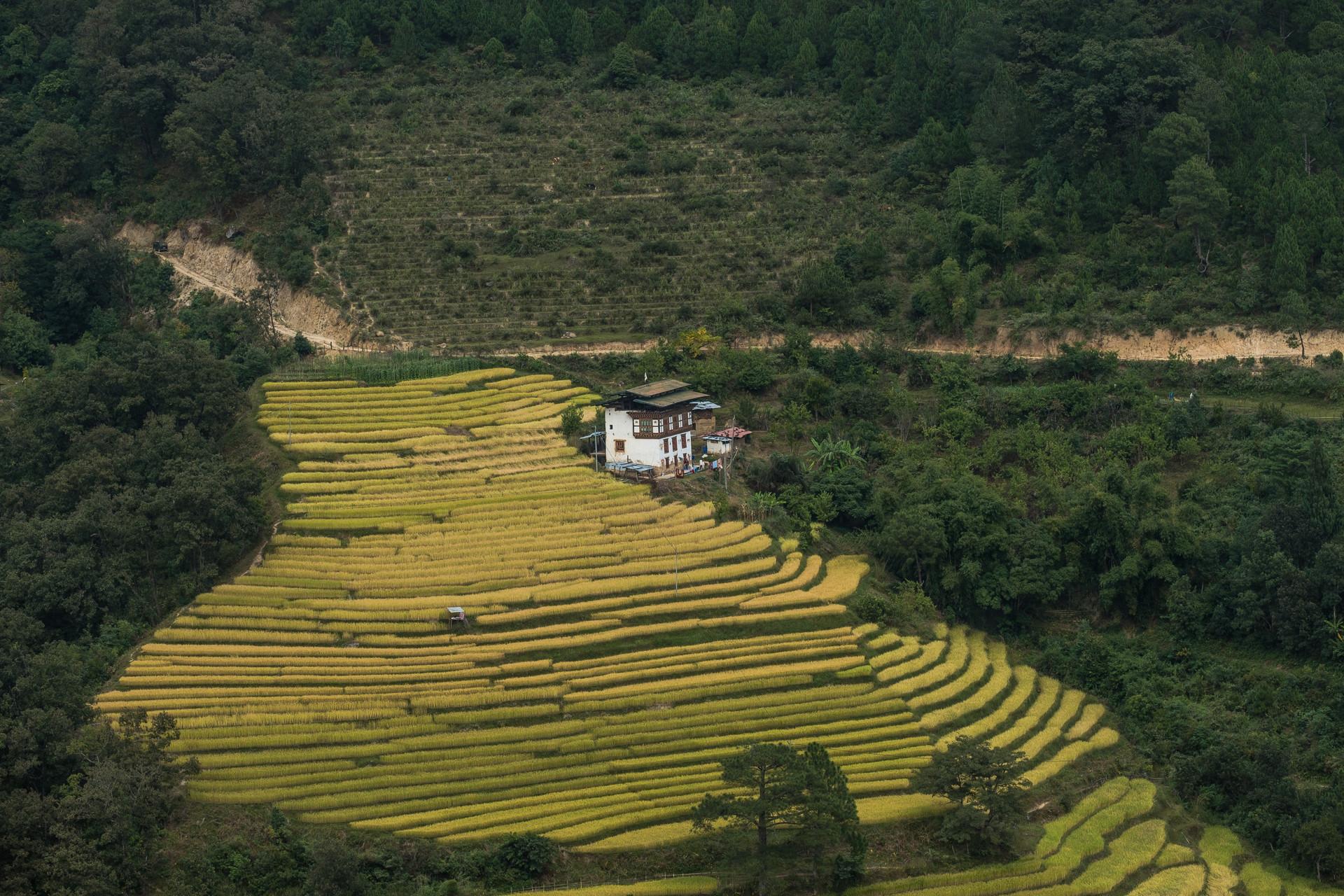 bhutan-225042.jpg