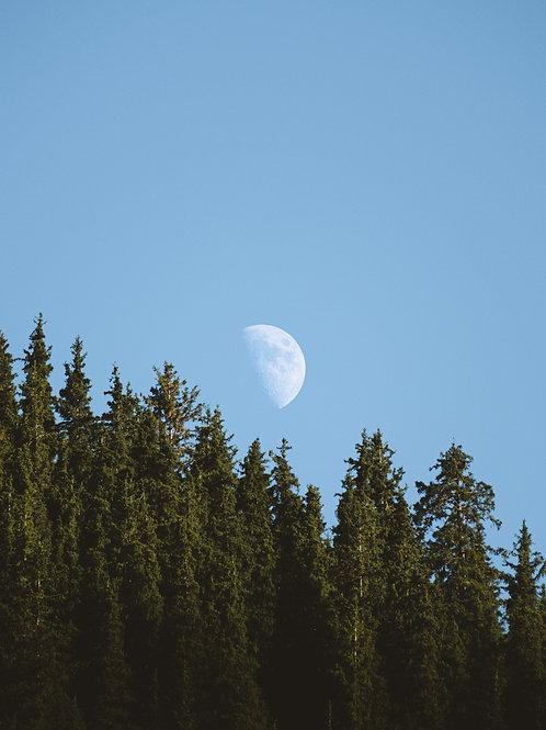 Moon & Pine Trees