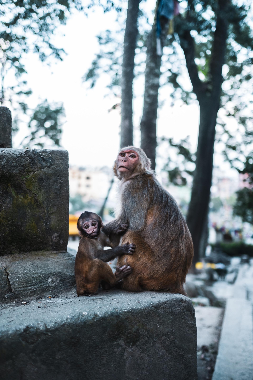 nepal_port-119450.jpg