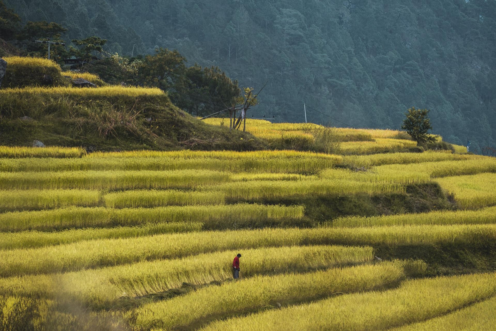 bhutan-225048.jpg