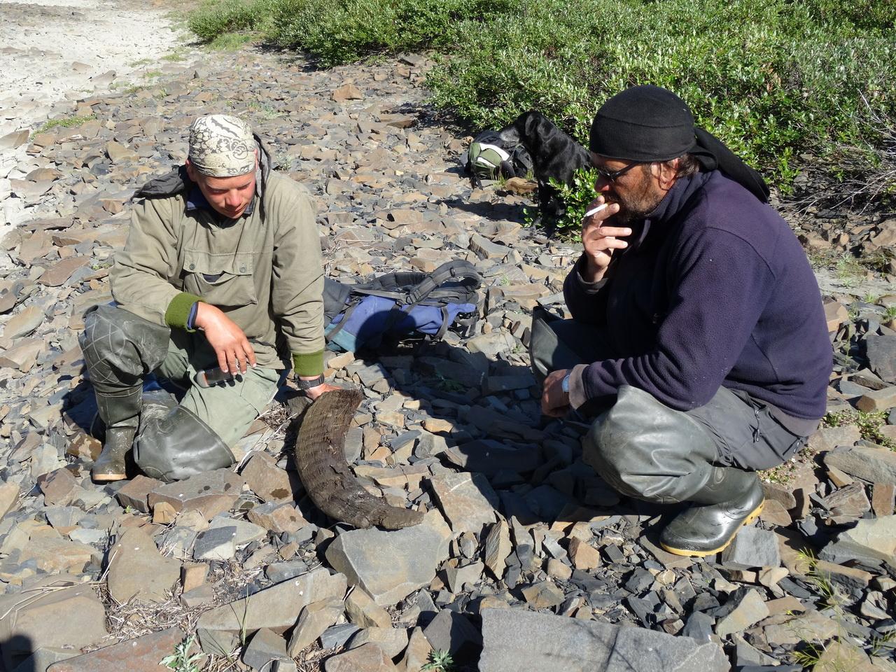 Находка рога носорога. П-ов Кыттык