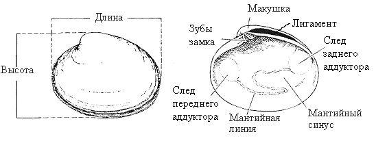 biv1.jpg