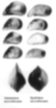mussels 1.jpg