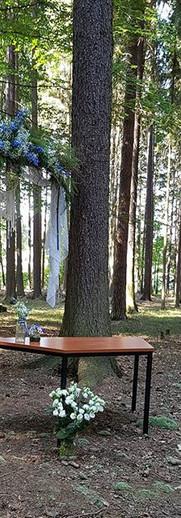 Přípravy vrcholí - bude lesní svatba