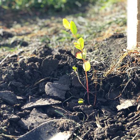 Glenthorne National Park tree planting day
