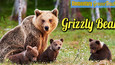 Grizzly Bear Singing Game (Free Music Download)