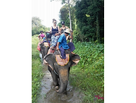Thailand Vaca - Elephant Safari 2