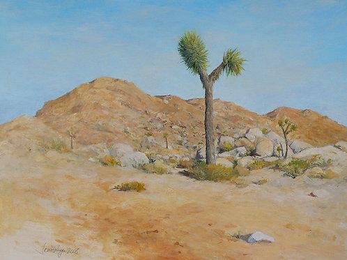 Rocks and Young Joshua Tree