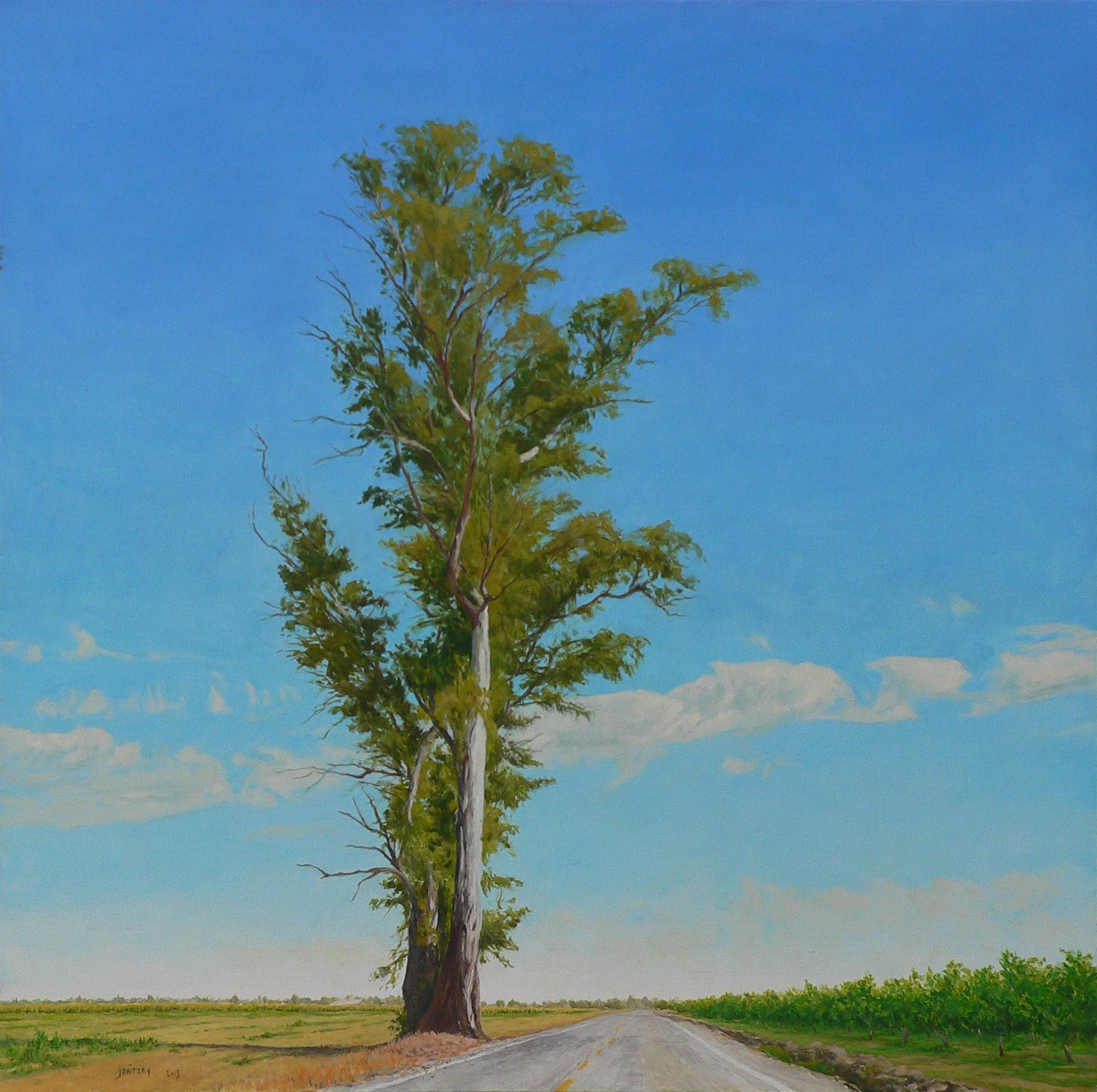 Eucalyptus, County Road 99.