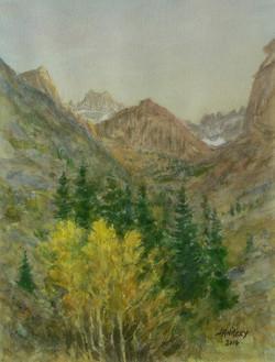 Aspen Near Glacier Lodge.