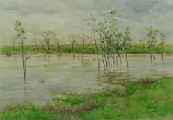 Putah Creek, High Water With Eucalyptus.