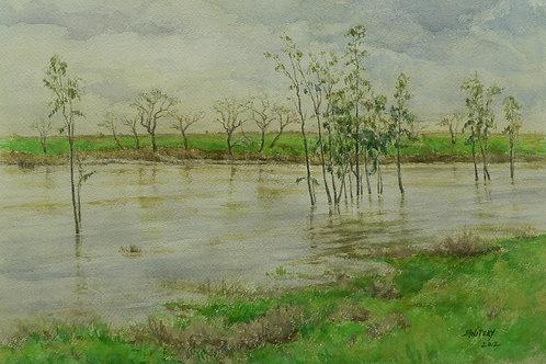 Putah Creek, High Water With Eucalyptus