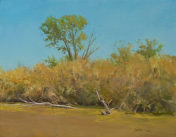 Putah Creek, Summer, Cottonwood.