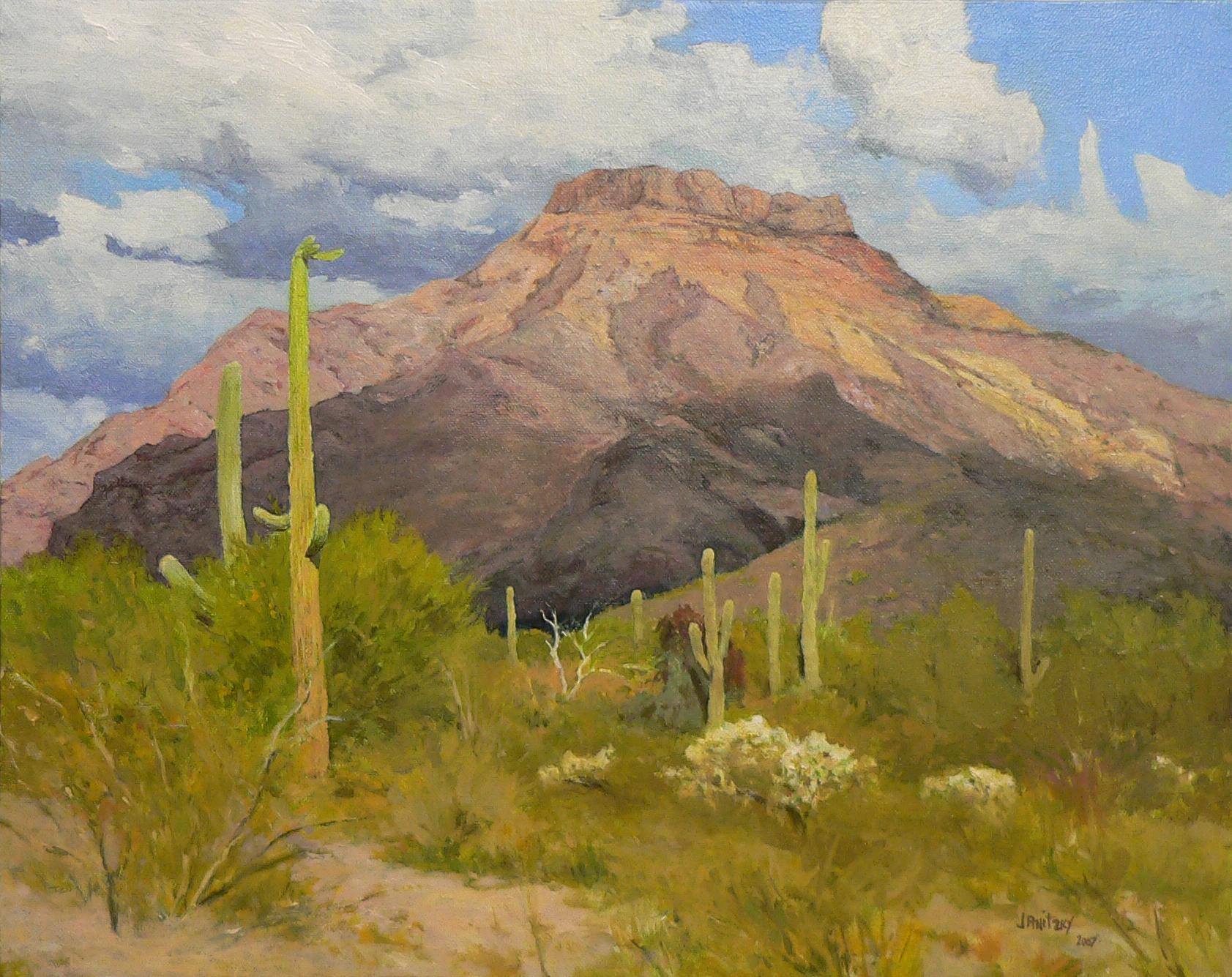 Saguaros, Ajo Mountains.