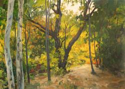 Putah Creek, Overgrown Path.