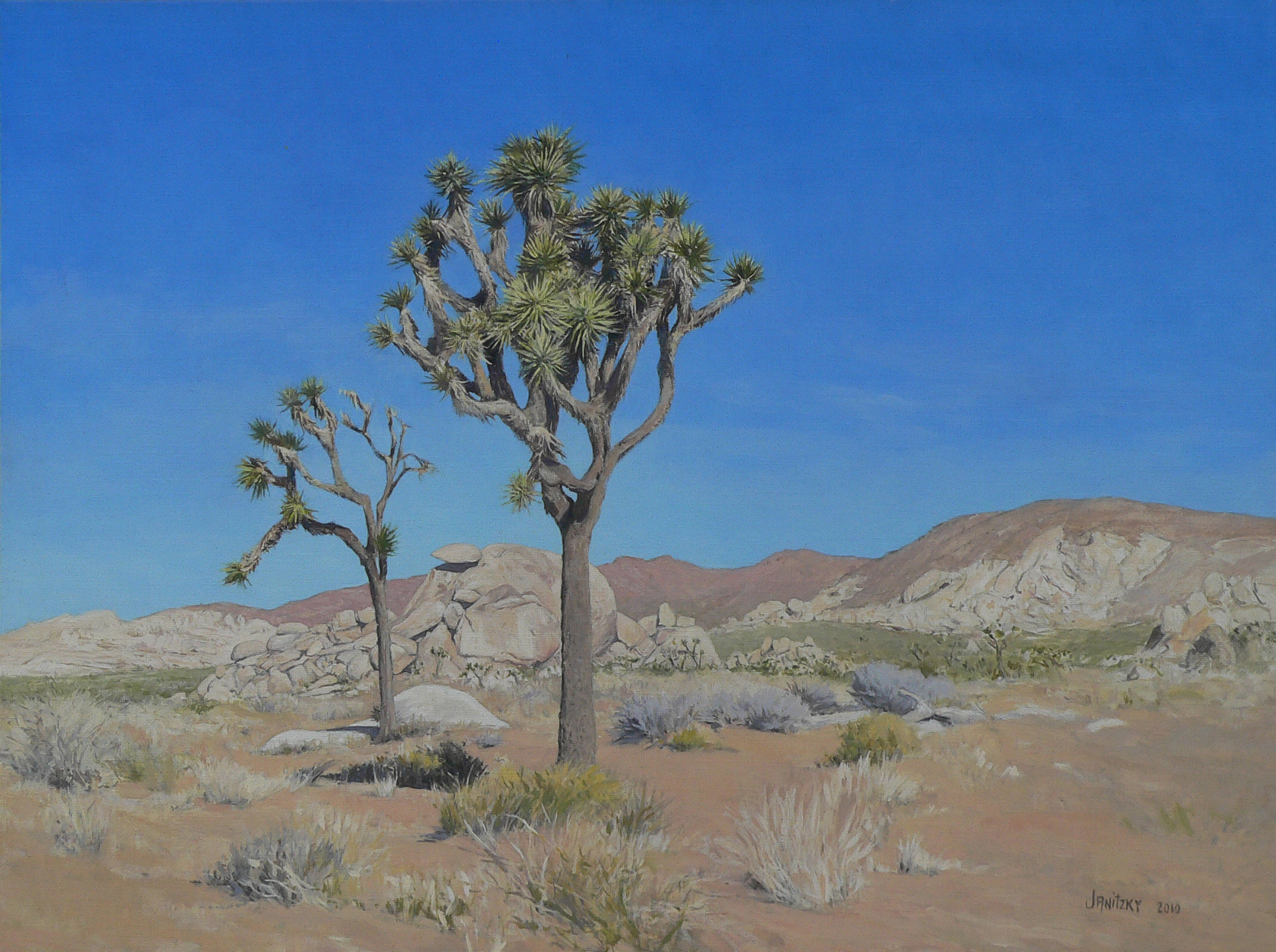 Joshua Trees, Cap Rock.