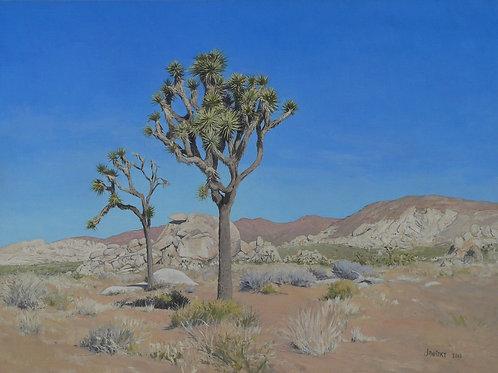 Joshua Trees, Cap Rock