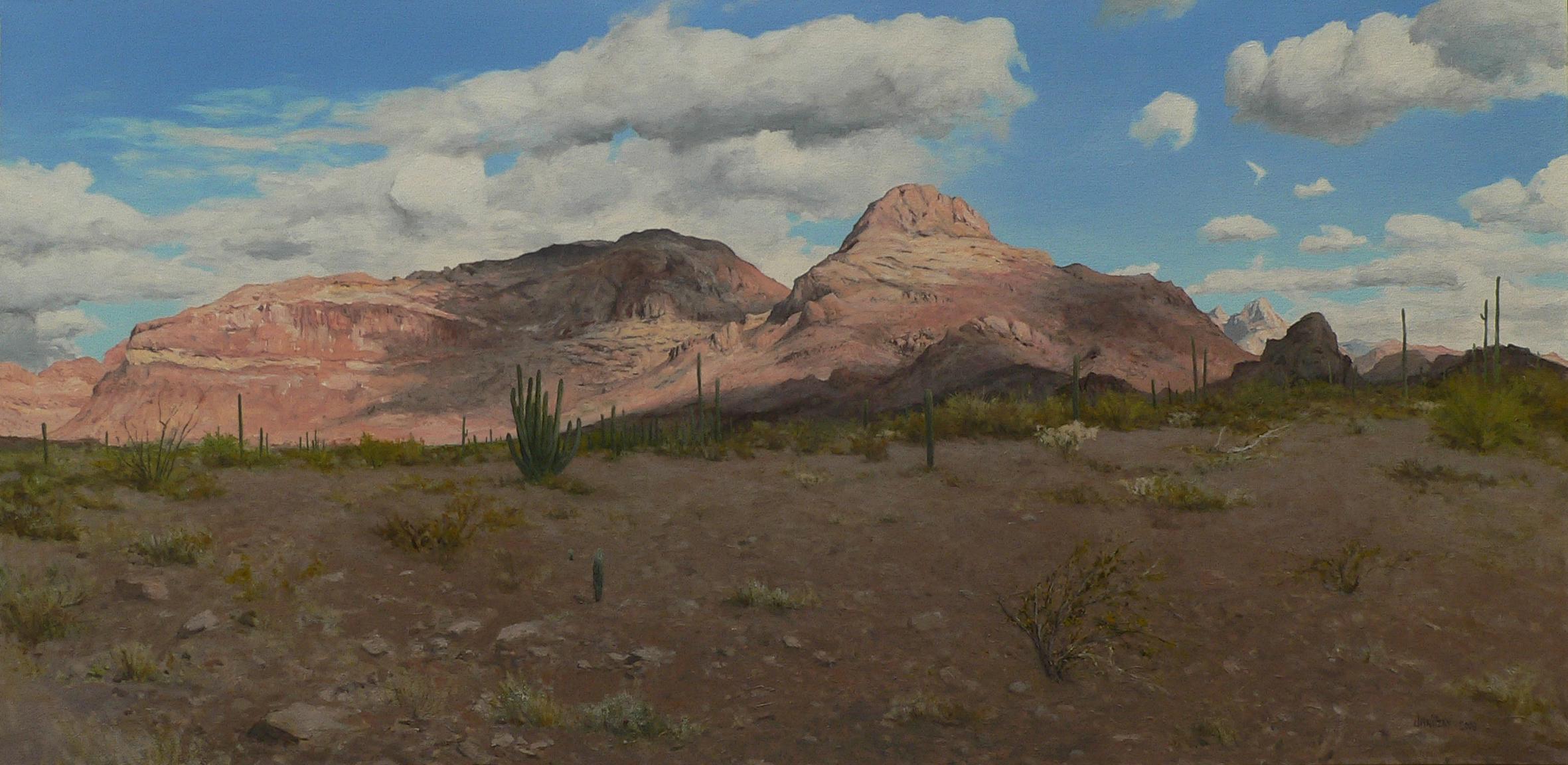Organ Pipe Cactus, Ajo Mountains.