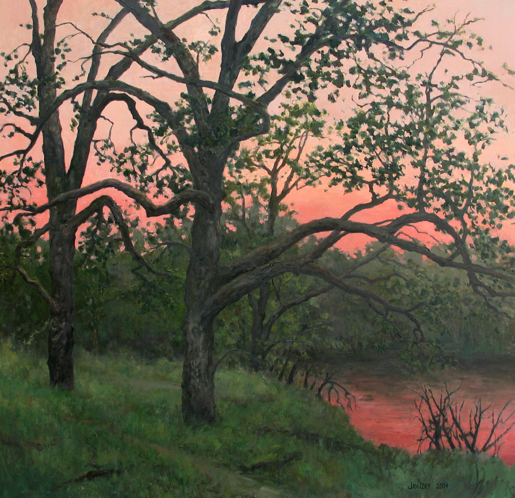 Putah Creek, Evening Oaks (''Transient'').