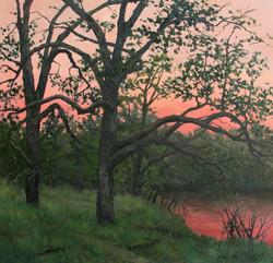 Putah Creek, Evening Oaks (''Transient'').