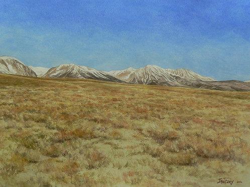 Sage Brush, Eastern Sierras