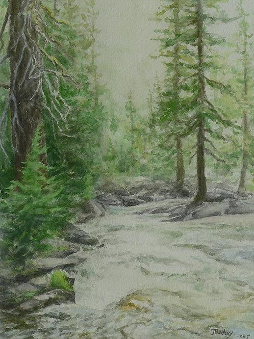 Lyons Creek, Looking Downstream