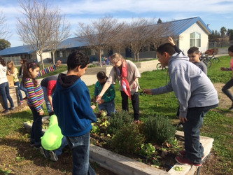 Students pick veggies of their labor