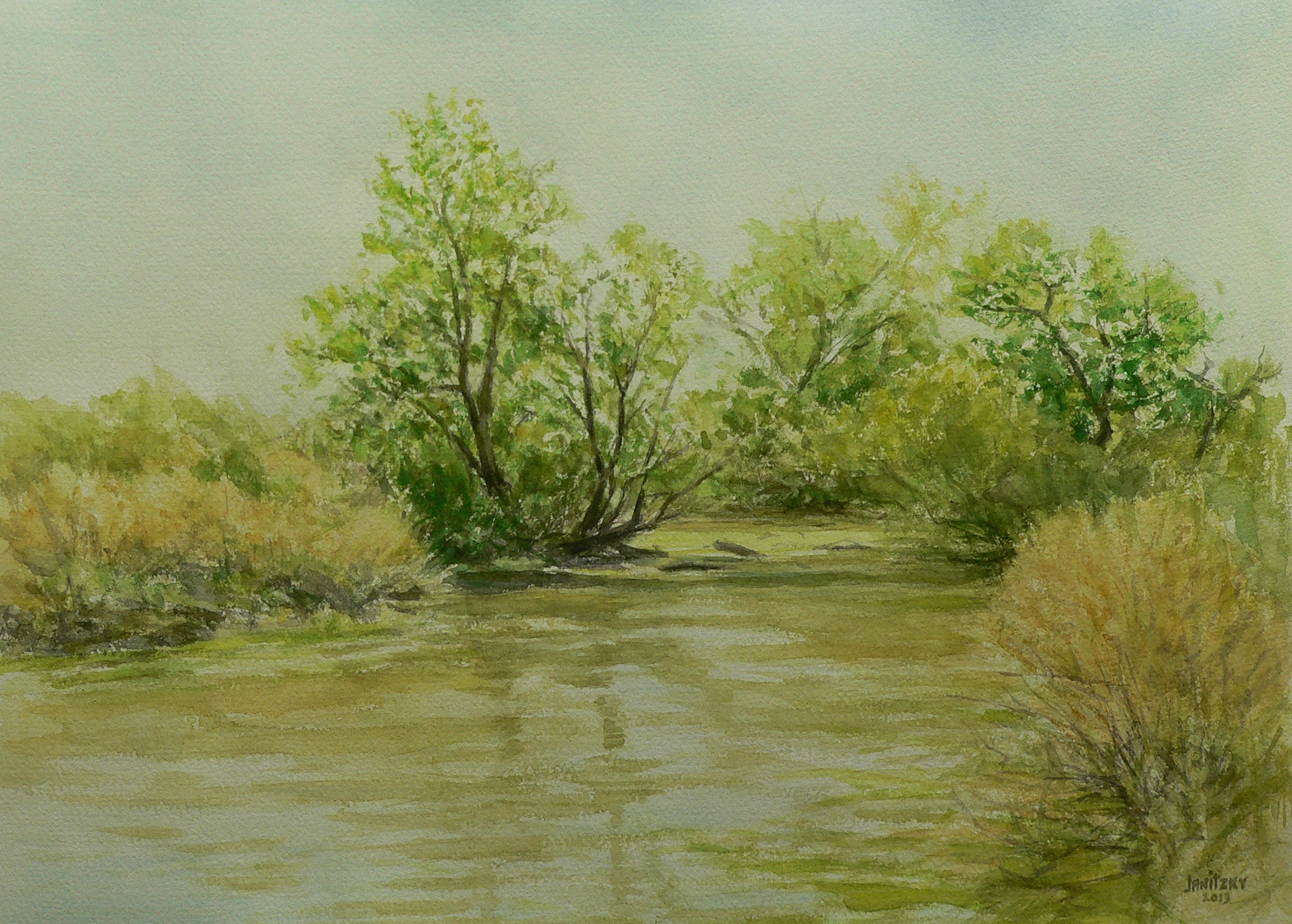 Putah Creek, Summer, Cottonwoods.