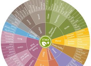 Aroma Wheel for Tea Lovers