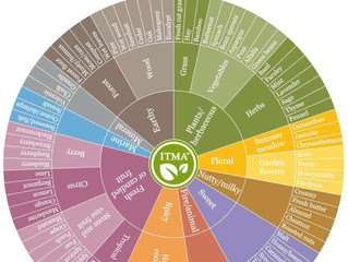 Aroma Wheel for Tea Lovers