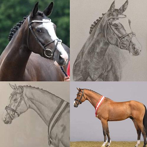 Custom Pet Portraits - 8x10 Pencil