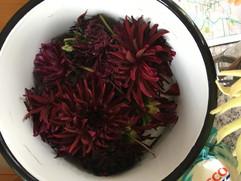 Flower Power - Burgundy