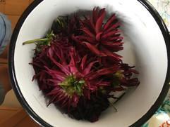 Flower Power - Shades