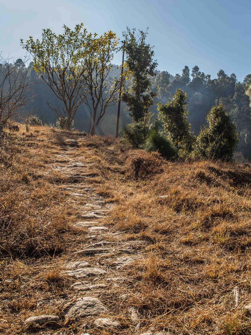 Nature Trails around Binsar