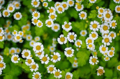 Munnar-Kerala_Flowers_unbound.jpg