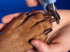 Защо трябва да режем ноктите на кучето?