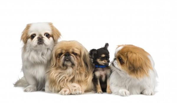 Съвети при покупката на куче