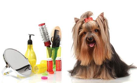 Dog-grooming-photo.jpg