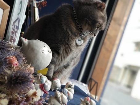 11月の窓(前半)ー家出ネコさん次々旅立つ