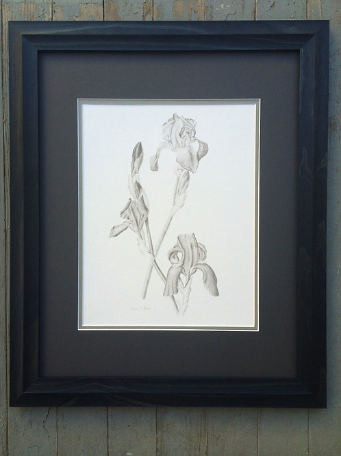 Framed Irises in Bloom - Giclee Print