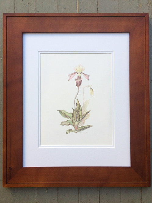Framed Paphiopedilum Orchid - Giclee Print
