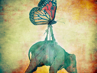 The Rise of the Butterflies and the Elephants.