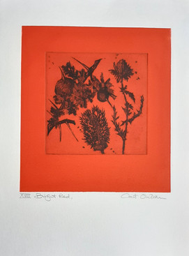 2009 Bright Red, XVIII