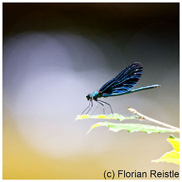428 Libelle 2.jpg
